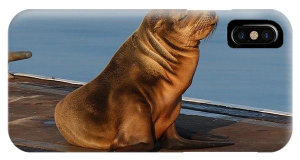 Sleeping Wild Sea Lion Pup  IPhone Case