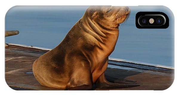 Sleeping Wild Sea Lion Pup  IPhone Case
