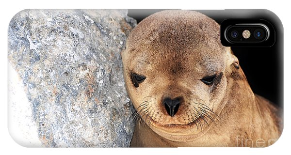Sleepy Baby Sea Lion IPhone Case