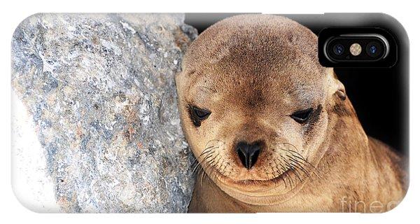Sleepy Baby Sea Lion IPhone Case