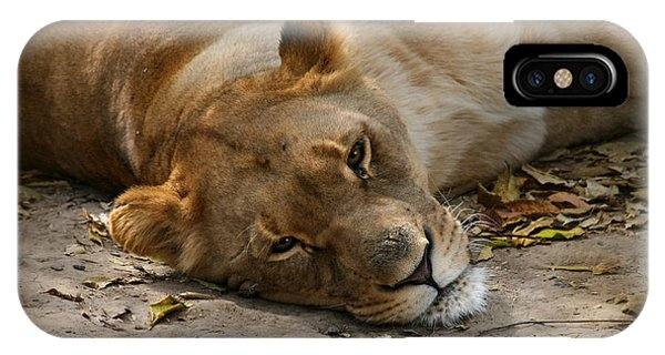Sleepy Lioness IPhone Case