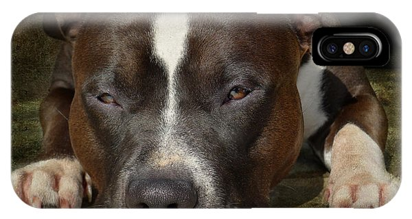 Bull iPhone Case - Sleepy Pit Bull by Larry Marshall