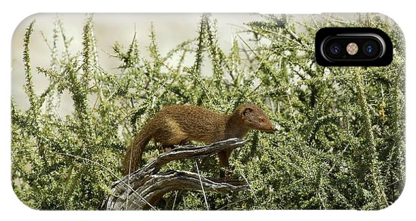 Slender Mongoose Phone Case by Tony Camacho/science Photo Library