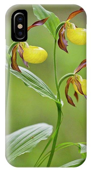 Monocotyledon iPhone Case - Slipper Orchid (cypripedium Calceolus) by Bob Gibbons