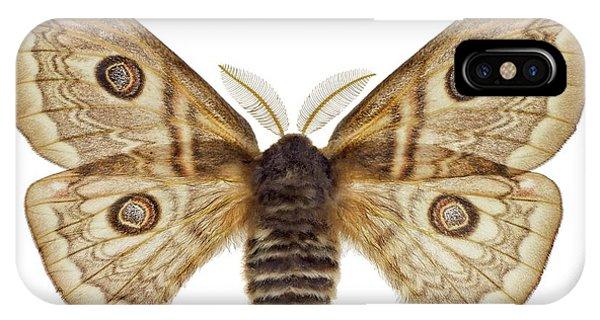 Sloe Emperor Moth IPhone Case