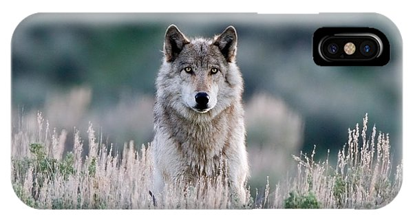 Yellowstone National Park iPhone Case - Slough Alpha by Max Waugh