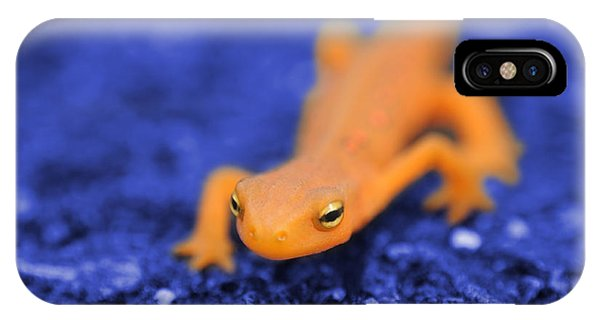 Newts iPhone Case - Sly Salamander by Luke Moore