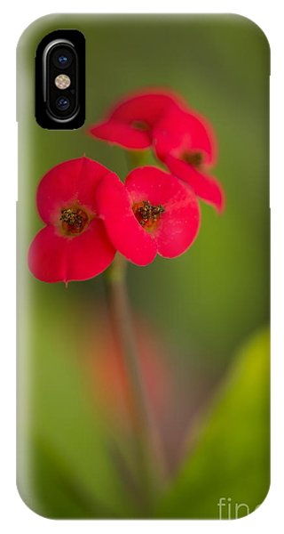 Small Red Flowers With Blurry Background IPhone Case