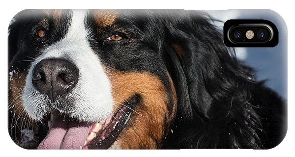 Smiling Bernese Mountain Dog In Winter Snow IPhone Case