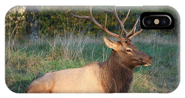 Smoky Mountain Elk IPhone Case