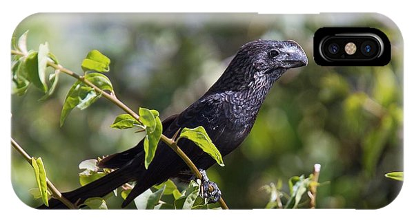 Smooth-billed Ani Phone Case by Bob Gibbons