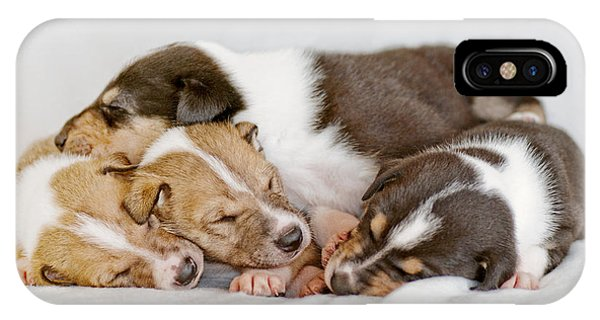 Smooth Collie Puppies Taking A Nap IPhone Case
