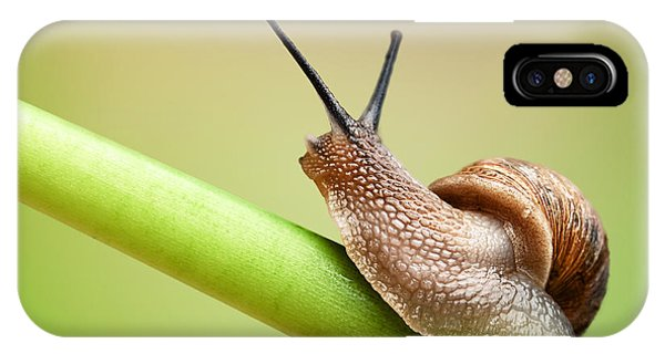 Plants iPhone Case - Snail On Green Stem by Johan Swanepoel