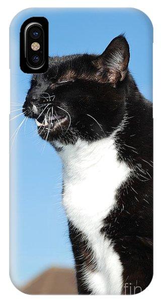 Sneezing Cat IPhone Case