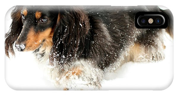 Sniffing Out Snow IPhone Case
