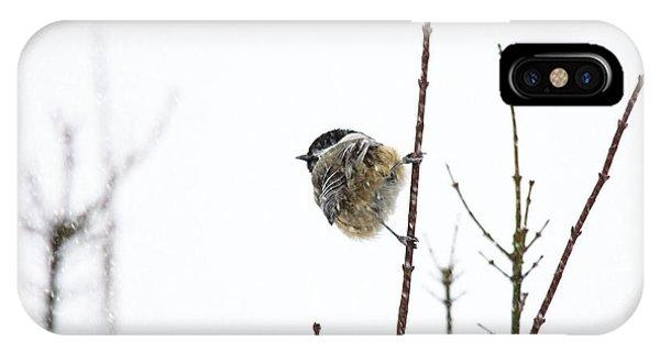 Snow Bird 2 Phone Case by Rebecca Cozart