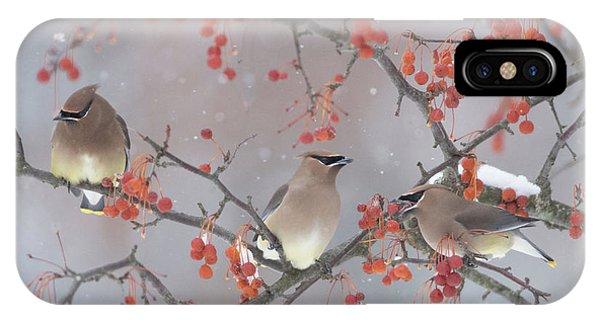 Winter iPhone Case - Snow, Bird And Tree by Ben Li