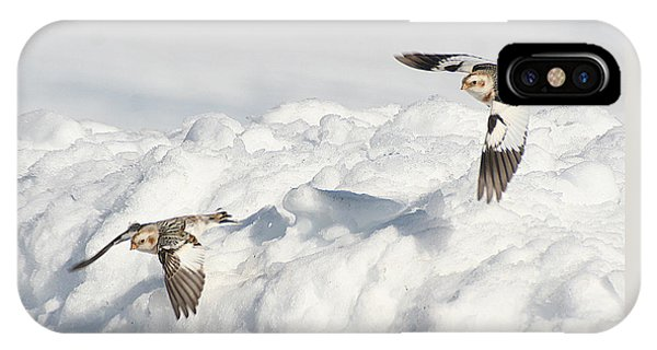 Snow Buntings In Flight IPhone Case