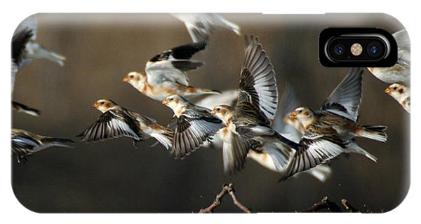 Snow Buntings Taking Flight IPhone Case