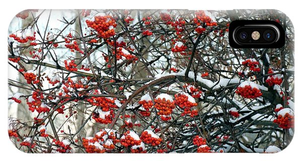 Snow- Capped Mountain Ash Berries IPhone Case
