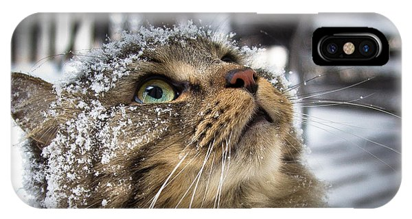 Snow Cat IPhone Case