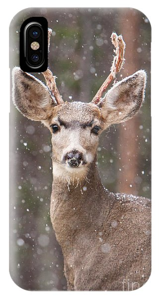 Snow Deer 1 IPhone Case