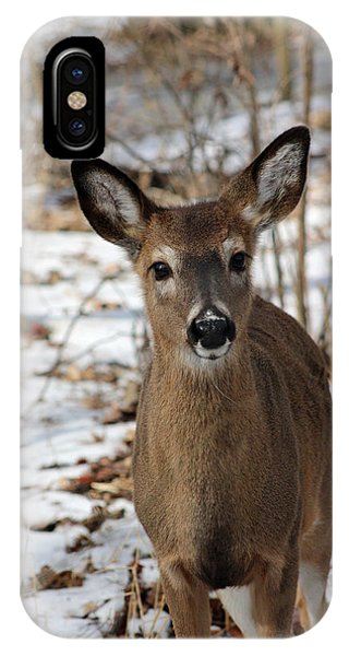 Snow Deer IPhone Case