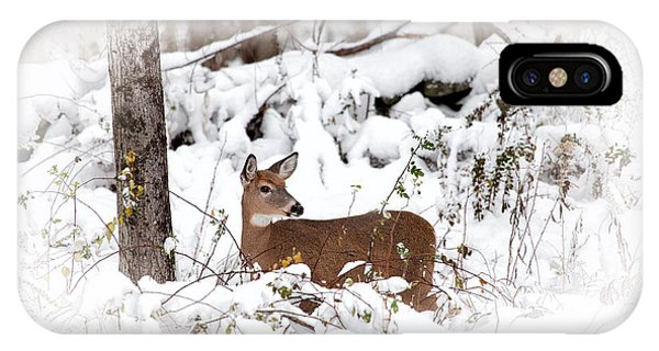 White Tailed Deer iPhone Case - Snow Doe by Karol Livote