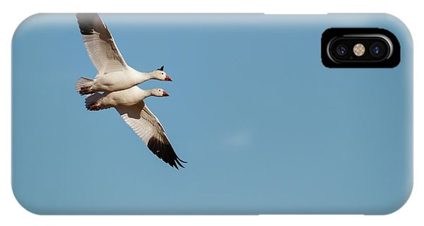 Migratory Birds iPhone Case - Snow Geese (chen Caerulescens by Larry Ditto