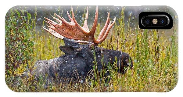 Snow Globe Moose IPhone Case