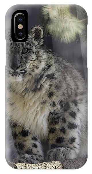 Snow Leopard iPhone Case - Snow Leopard 1 by Everet Regal