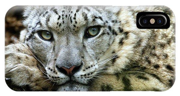 Snow Leopard iPhone Case - Snow Leopard by Chris Boulton