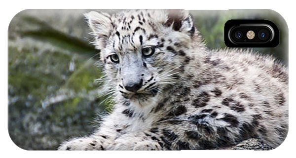 Snow Leopard Cub IPhone Case