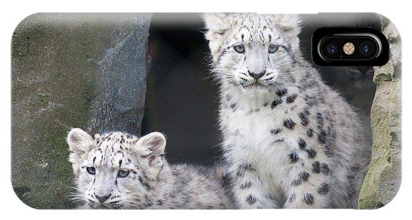 Snow Leopard iPhone Case - Snow Leopard Cubs by Chris Boulton