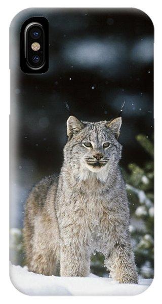 Snow Lynx IPhone Case