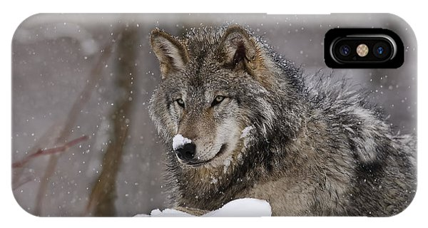Snow Nose IPhone Case
