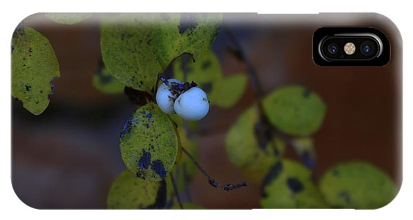 Snowberries Phone Case by Dorothy Hall