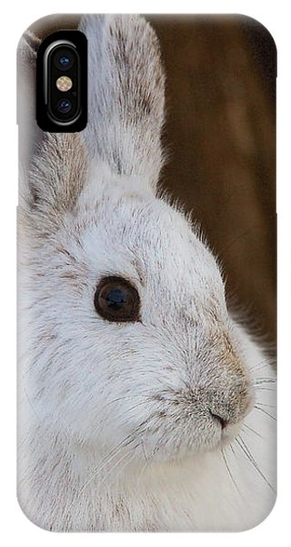 IPhone Case featuring the photograph Snowshoe Hare by Nature and Wildlife Photography