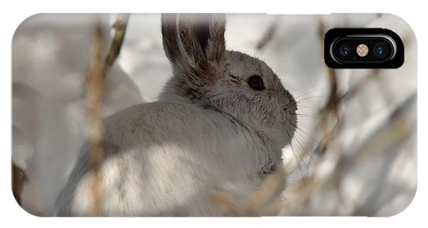 Snowshoe Hare IPhone Case
