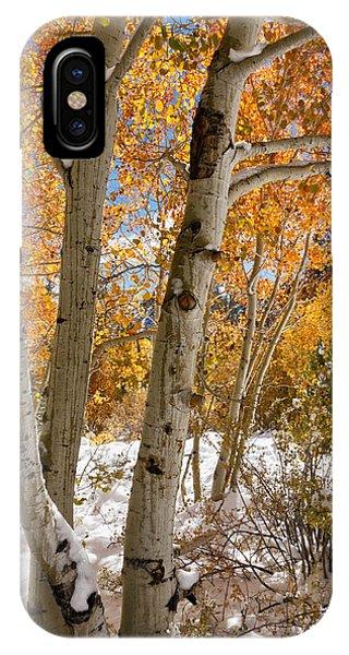 Snowy Aspen Grove IPhone Case