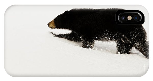 Snowy Bear IPhone Case