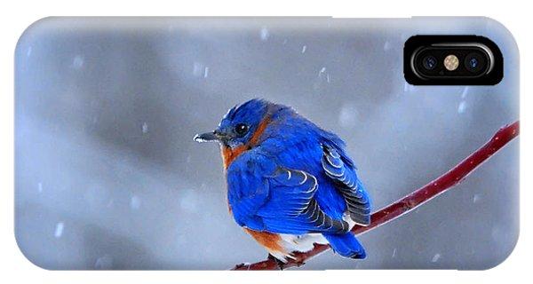 Snowy Bluebird IPhone Case