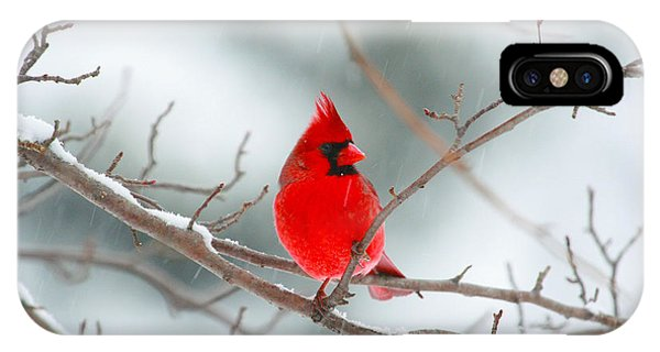 Snowy Cardinal IPhone Case