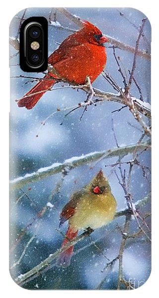 Snowy Cardinal Pair IPhone Case