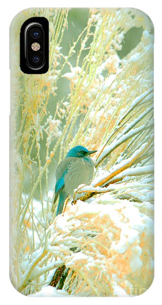 Snowy Chamisa In High Mountains IPhone Case
