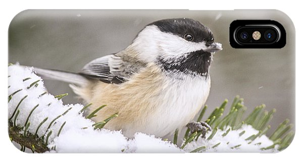 Snowy Chickadee IPhone Case