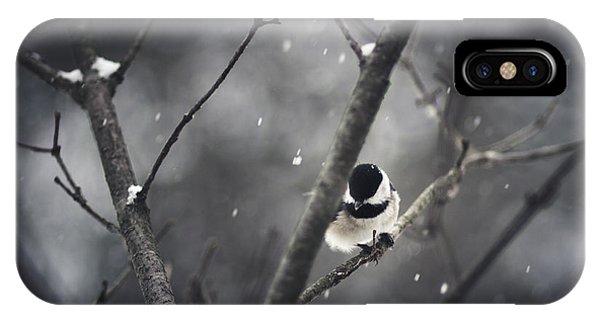 Chickadee iPhone Case - Snowy Chickadee by Shane Holsclaw