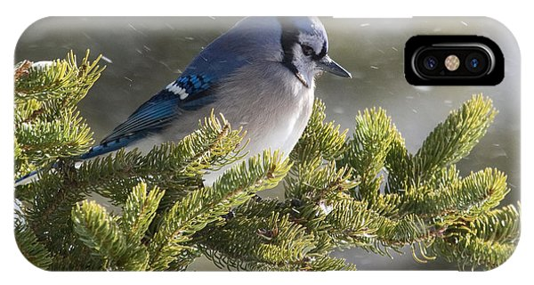 Snowy Day Blue Jay IPhone Case