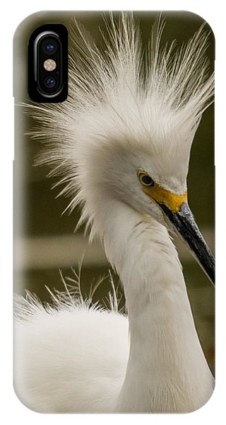 Snowy Egret Display IPhone Case