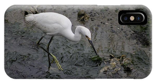 Snowy Egret Feeding IPhone Case
